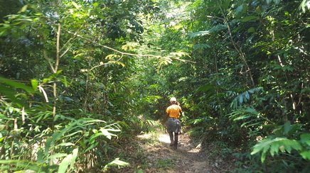 Hiking in the jungle in the Cardamom Mountains